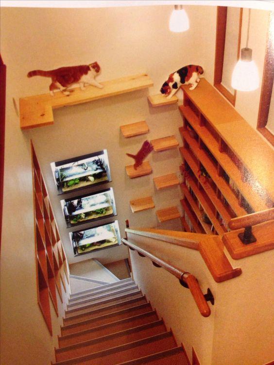 94f754235c53aac517b84055ea78e9f5--cat-climbing-wall-cat-stairs.jpg