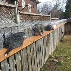 awesome big outdoor catio, cat enclosure with long tunnels and cage