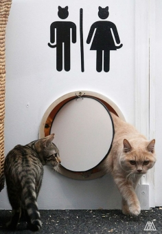 Scotland's First Cat Cafe