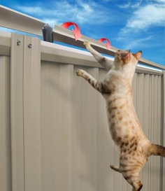 Cat Proof Fencing