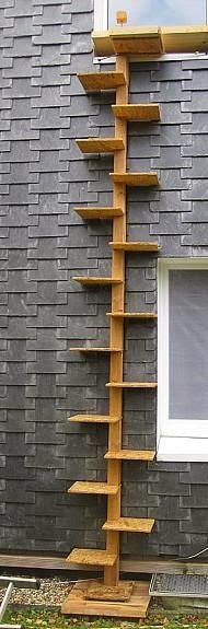 CAT -LADDERS: Cat-ladder in Germany. Photo: Unknown.