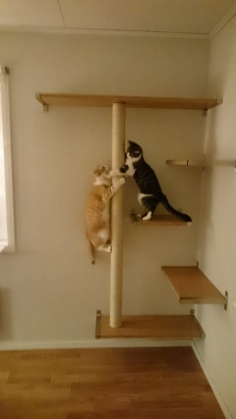Our new catcorner! Shelves and support from Ikea. scratching pole made from a drainpipe and sisal rope.