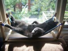 僕たちココが大好きにゃ♡簡単にできる猫用ハンモック作り方