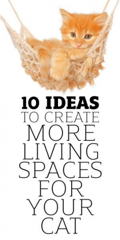 10 Ideas To Create More Living Spaces For Your Cat
